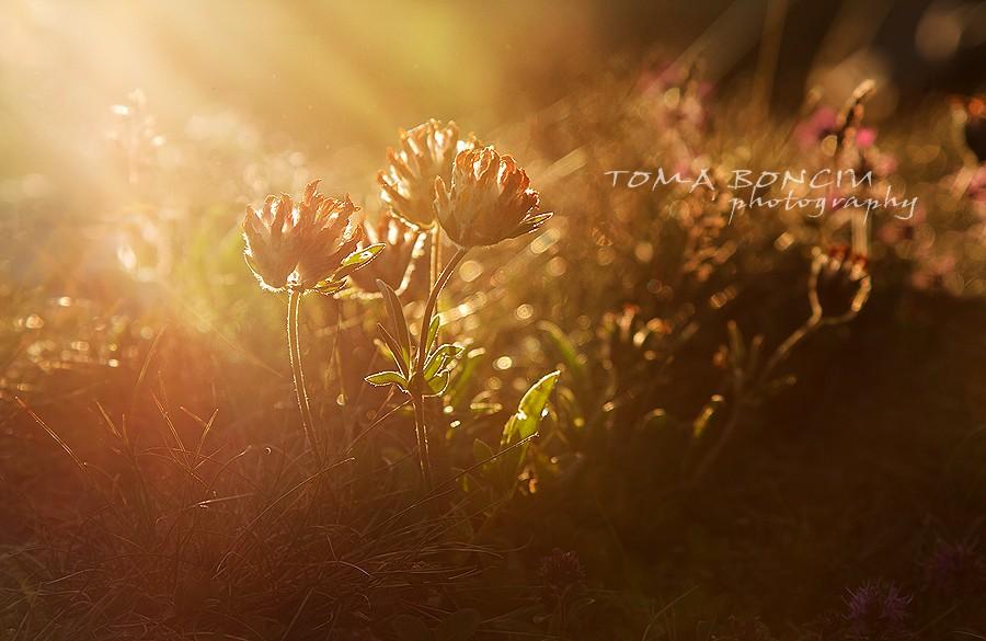 Sub liniștea razelor de soare