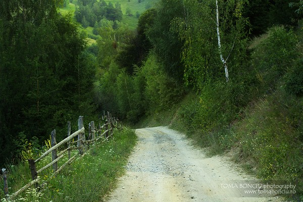 Un drum spre padure