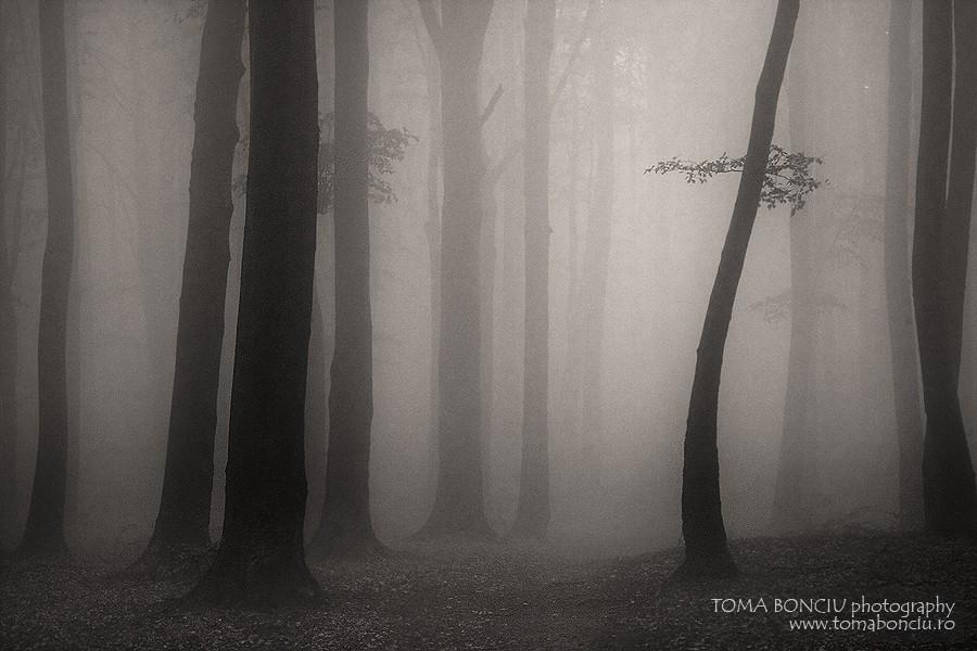 Miros de pădure