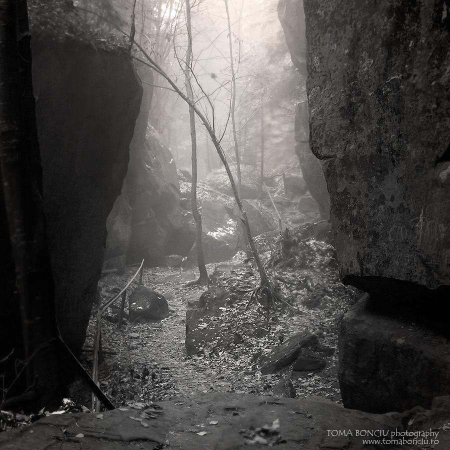 Cărări nocturne - Fotograf Toma Bonciu