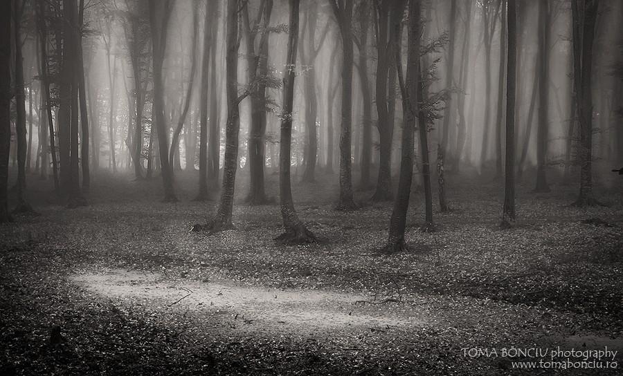 Printre copaci (Through the trees)
