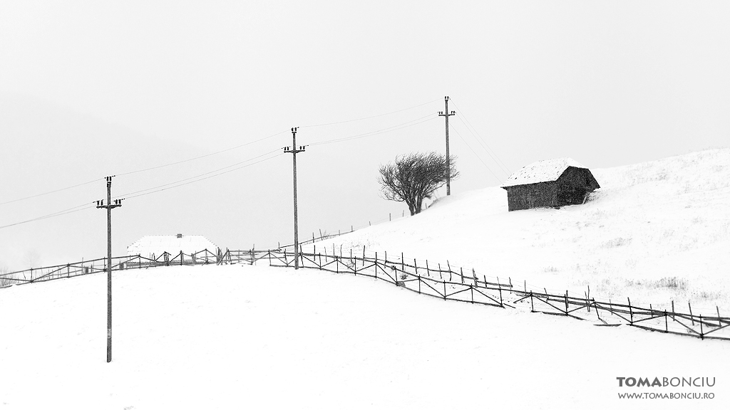 Linii pe albul zăpezii (Lines through the snow)