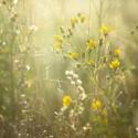 Fotografie de flori salbatice – Notiuni de baza in fotografia de peisaj – Episodul 7