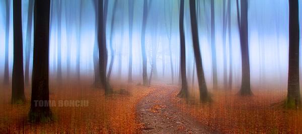 Un drum spre lumina